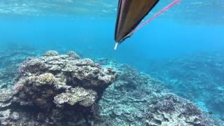 http://fisherman.jp/ The Island Ishigaki,Yaeyama,Okinawa - Commerci...