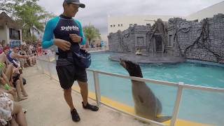 Cozumel Sea Lion Show May 2018
