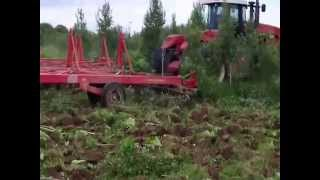 reclaming land in russia with versatile and sunflower