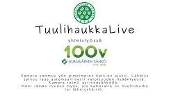 Tuulihaukan livekamera (Common kestrel in Finland) #tuulihaukkalive
