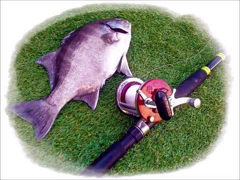 Part 1 Galjoen Fishing Tips SA