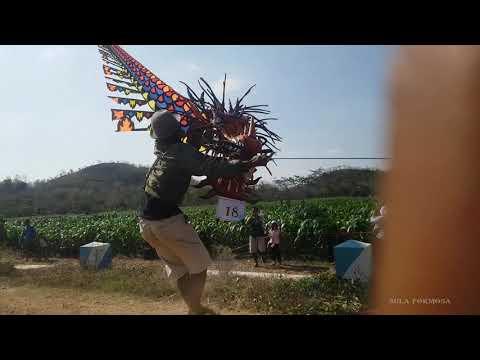Layangan Naga 50 Meter Gagal Terbang Di Festival Layang Layang Sambit