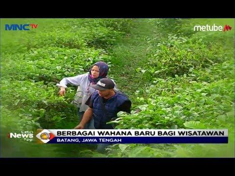 Agrowisata Pagilaran, Suguhkan Atraksi Wisata Dan Edukasi Di Kebun Teh - LIP 15/06