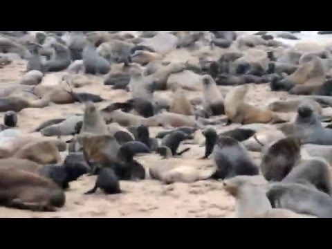 Trip Namibia 2015! HD 1080P Skydiving, Etosha Park