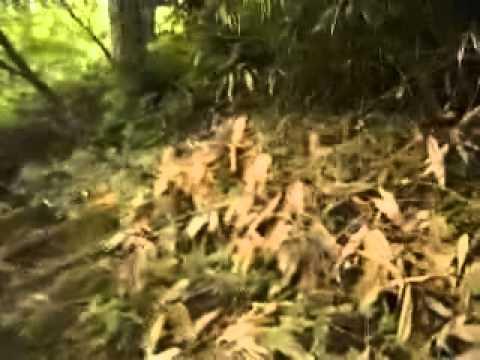 パワースポット 岐阜県位山 バーチャル登山1