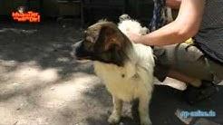 Hund Fubie ist ein Tier und will zu dir!