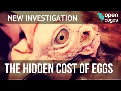 🔴 INVESTIGATION - Hidden Cost of Eggs ⬛ Cage egg farms - Open Cages