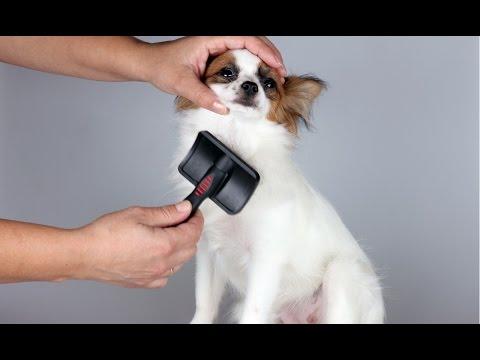 Curso CPT Tosas em Cães e Gatos e Acidentes em Pet Shop