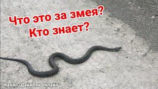 Что это за змея, кто знает? Скажите, если знаете.