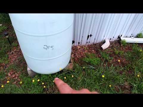 Preppers DIY Easy five min rain water  barrels