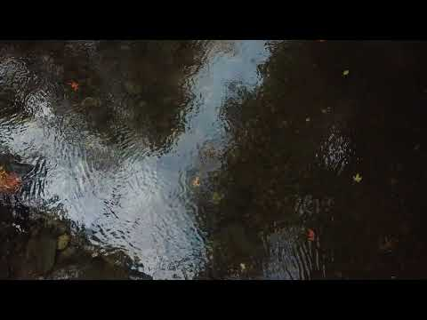 Whonnock Lake, Kanaka Creek And Spawning Salmon, Maple Ridge, B.C.
