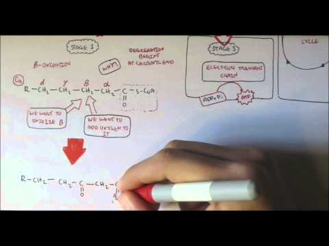human-metabolism-map-vii---fatty-acid-degredation