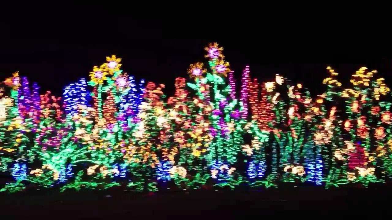 christmas lights at bellevue botanical garden - Bellevue Christmas Lights