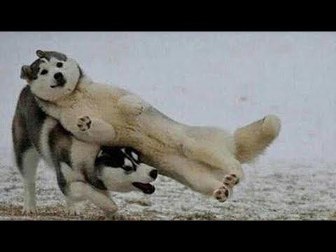 Dog Trust Fall