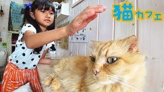 ●普段遊び●今まで至上最高に人懐っこいネコ達に出逢った♡福島市猫カフェ!まーちゃん【7歳】おーちゃん【4歳】#657 thumbnail
