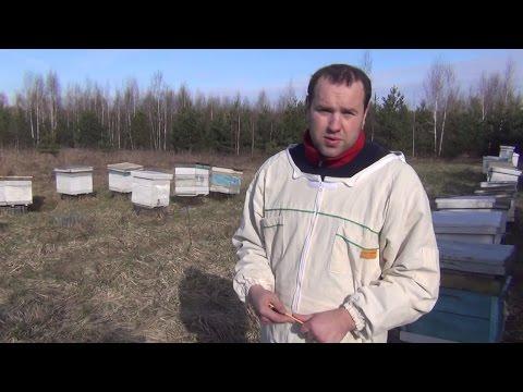 мёд таёжный луговой разнотравье - Таёжный сибирский мёд