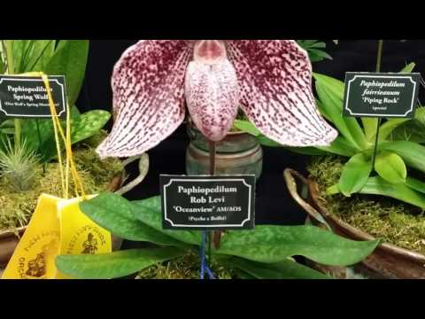 2017 New Hampshire Orchid Show