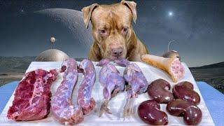 ASMR Pitbull Eating Raw Foods VenisonSheep kidneyPig tailQuailDuck neck