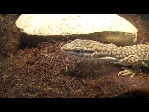 Reptile Room Tour October 2016!!