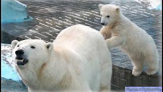 Терпеливая мама Герда и озорные медвежата-плюшепопики