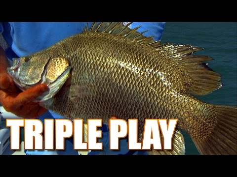 Most Delicious Fish In the World - Space Coast Tripletail Fishing