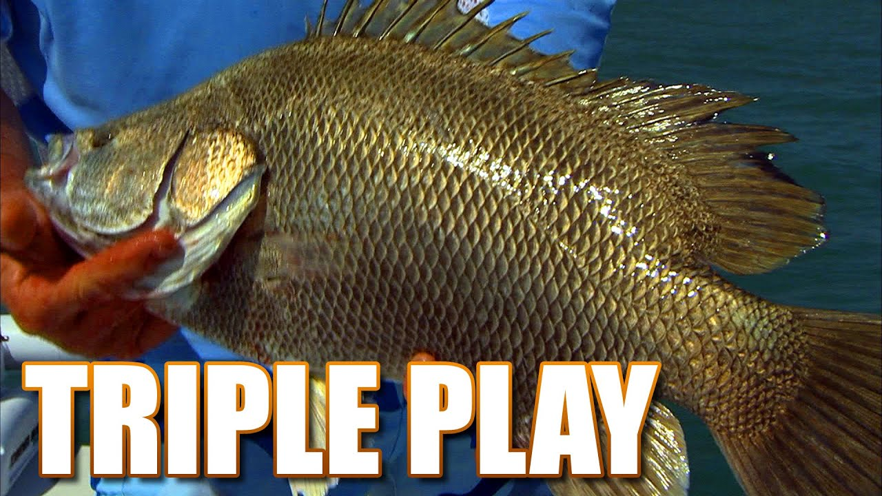 Addictive Fishing Television - Triple Play - The Tastiest Fish in the Ocean