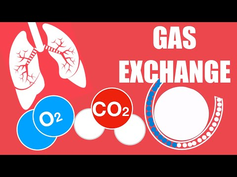 Biology - Gas Exchange (Animals including Humans)