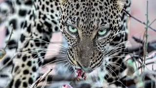 Хищники Африки