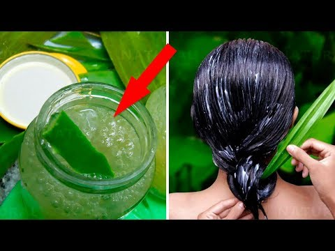 How to Make Aloe Vera Oil for Hair and Skin Care