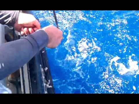 Dolphin dock deep sea fishing charter port aransas tx for Dolphin deep sea fishing
