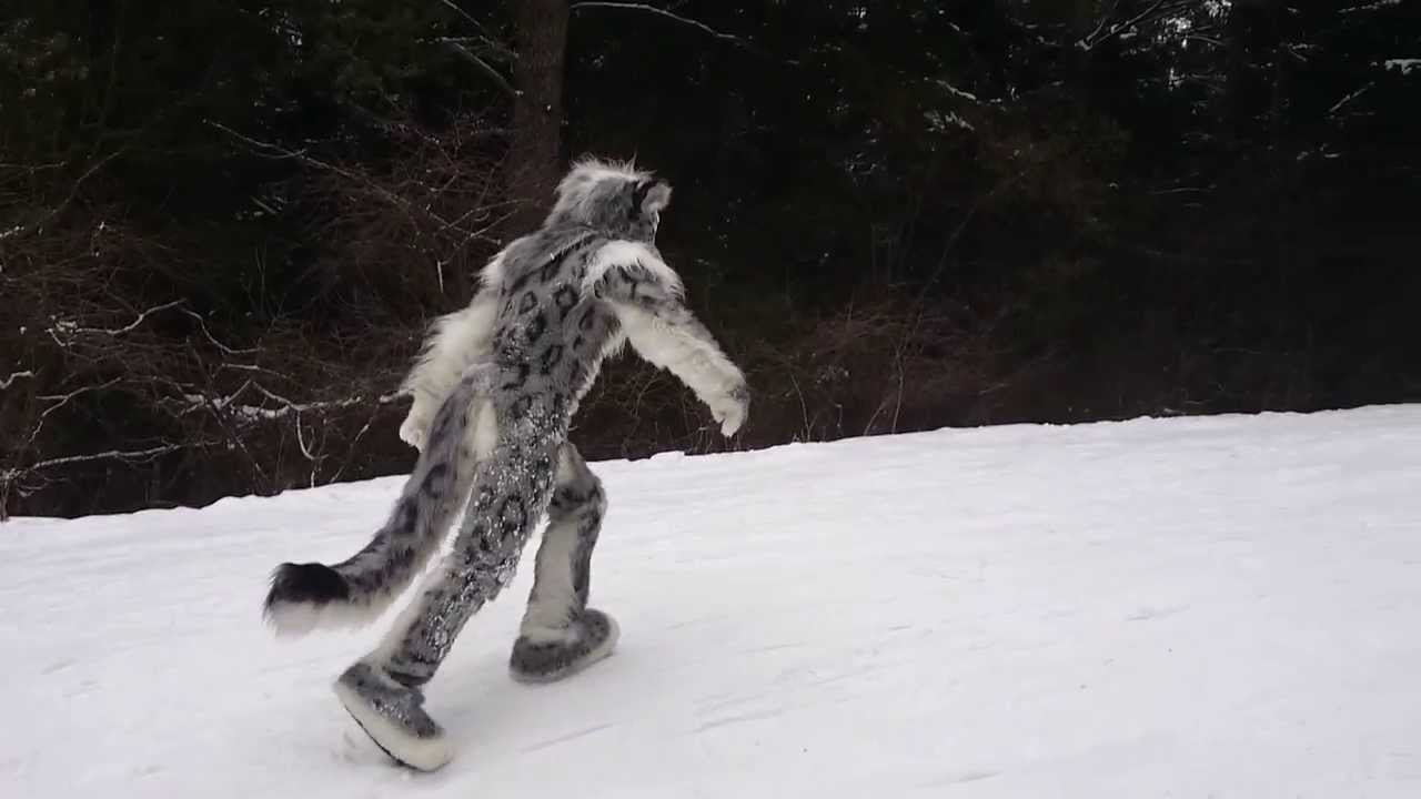 Image Gallery jumping snow leopard