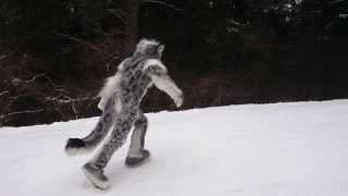 Snow leopard jumping