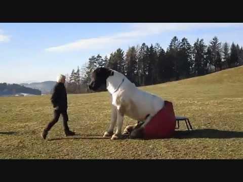 Pferd Sitzt Am Sitzsack Und Am Sofa 1wmv