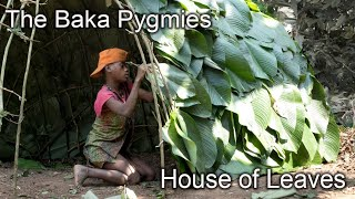 Amazing Home of Sticks and Leaves - Baka Pygmy Hut