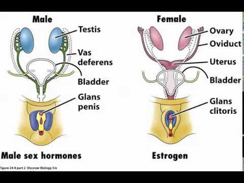 Scientific Reasons Women Should Be Having More Sex.