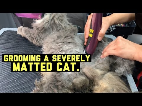 SEVERELY MATTED CAT GETS GROOMED - VIEWERS DISCRETION ADVISED!