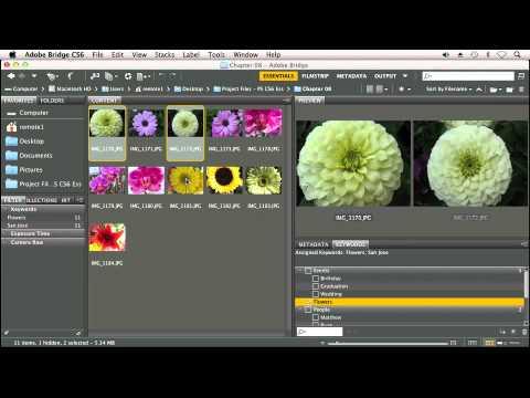An Overview of Adobe Bridge - Adobe Photoshop CS6 Tutorial