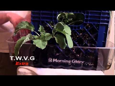 Milk Crate Gardening: The Wisconsin Vegetable Gardener Extra 5