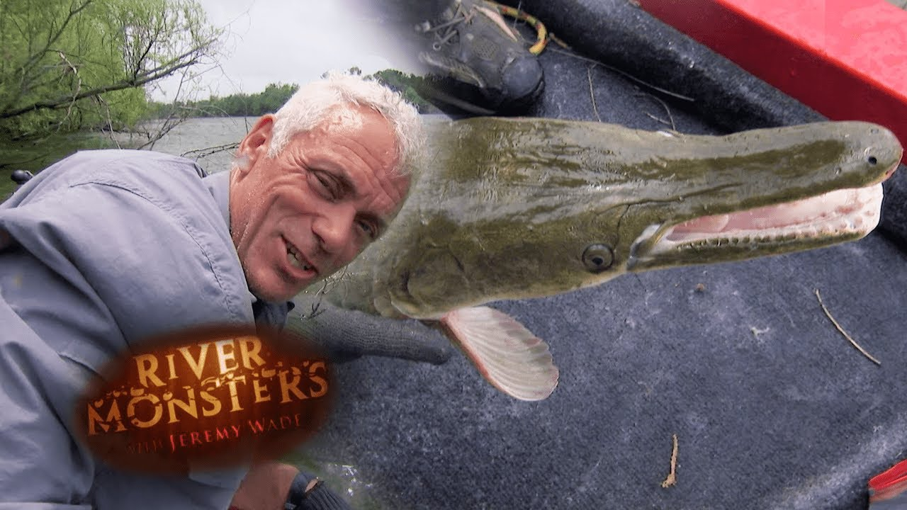 Catching An Evasive Alligator Gar | CROCODILIA | River Monsters