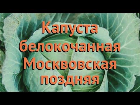 Капуста белокочанная Москвовская поздняя 🌿 обзор: как сажать, семена капусты Москвовская поздняя