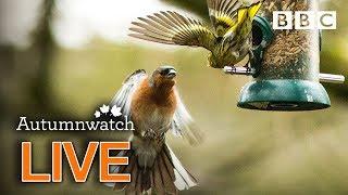 Cute wildlife cams UK 1 Nov 🦔🐾🐿   BBC Autumnwatch