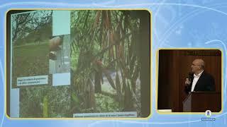 Insectos vectores de Xylella fastidiosa (Xylella 3/5)