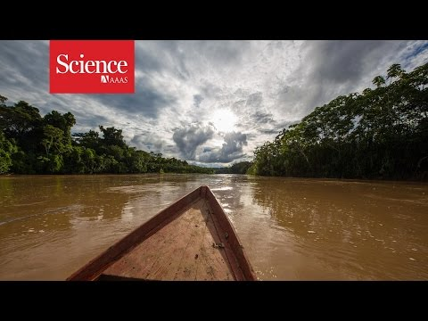 Making contact: The isolated tribes of the Amazon rainforest
