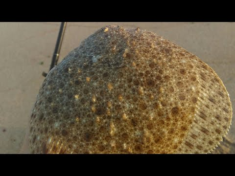 Ловля камбалы и бычка с берега.Черное море/ Fishing Flounder And Goby From The Shore