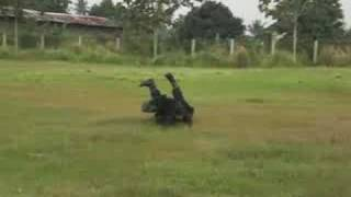 First Security Indonesia™ K9 Squad