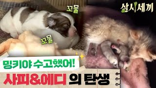 [밍키의 출산] 귀여운 두 강아지의 엄마가 된 밍키! 삼시세끼 정선편 10화