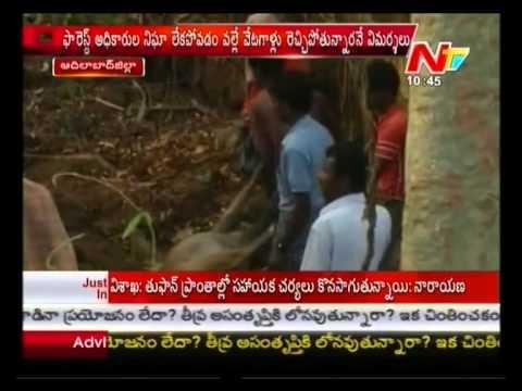 Predators Hulchul in Forest at Adilabad District