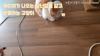 [ENG / SUB] My Lovely Cats 레이저…
