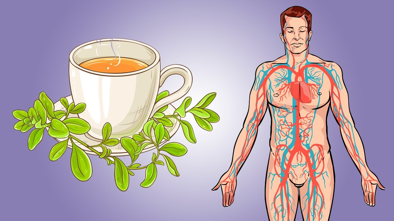 6 Incredible Benefits of Marjoram Tea