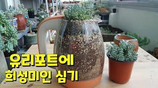 succulent plant. ,희성미인을  고장난 유…